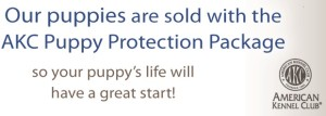 akc-puppy-protection