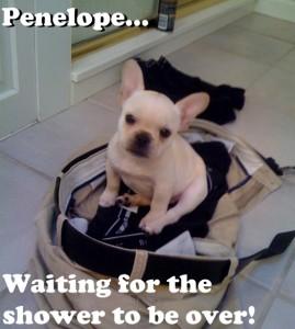 puppy-ready2