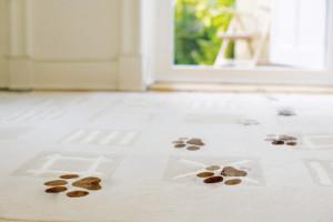 AGK4X9 Dirty footprints on carpeting